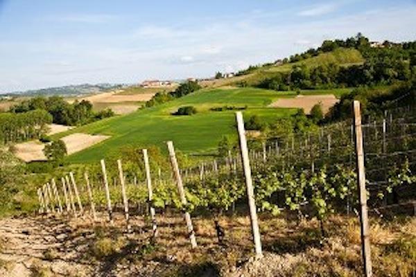 Agriturismi in crescita anche in Piemonte. Confagricoltura Asti: «Trend positivo ma nell'Astigiano bisogna investire di più su cultura e organizzazione»