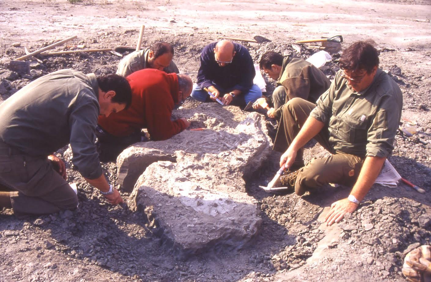 Il Museo Paleontologico chiuso dal 22 dicembre per lavori urgenti
