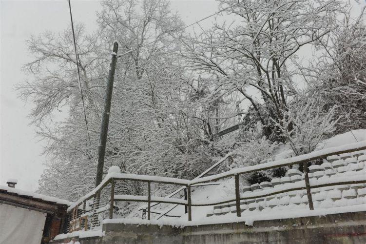 Appello dell'Enpa di Asti: Neve cerca casa