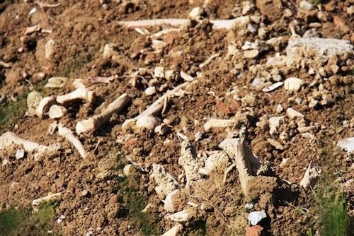 Causa maltempo riaffiorano ossa nel cimitero di Variglie