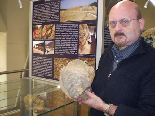 Un'ostrica fossile dall'eccezionale grandezza incuriosisce i visitatori del Museo Paleontologico