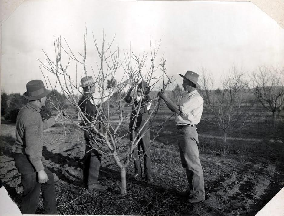 Con Legambiente un corso di potatura degli alberi