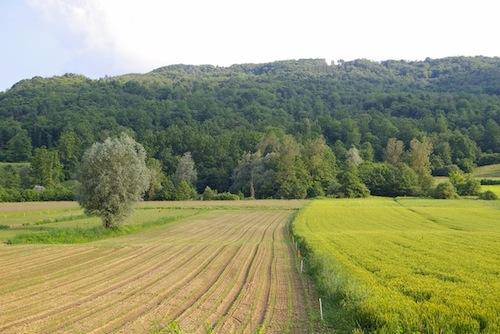 Psr: aperti i bandi su agroambiente e biologico