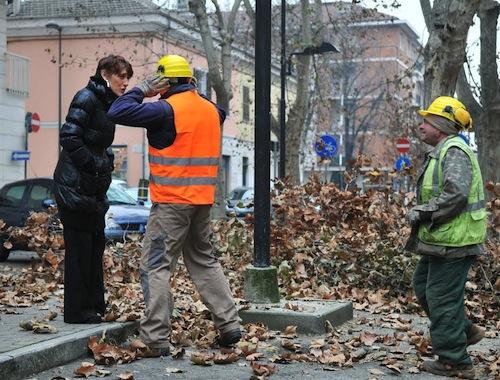 Potati gli alberi di viale Pilone e corso Torino