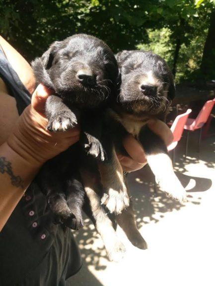 Otto cuccioli cercano casa e famiglia