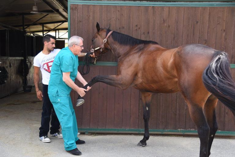 Visite veterinarie ai cavalli del Palio di Asti: la fotogallery