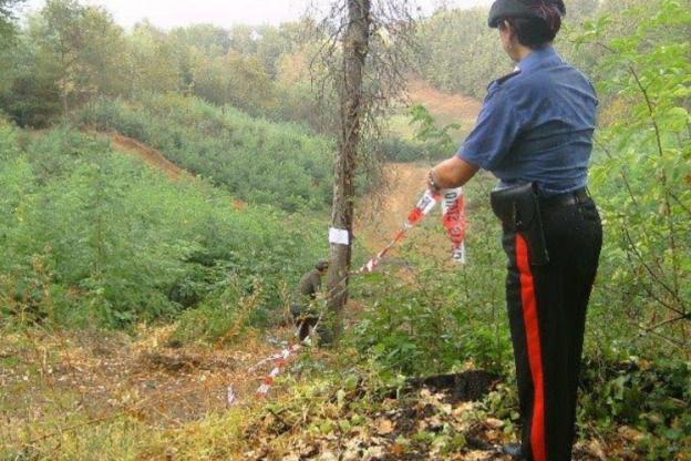 Taglio indiscriminato in un bosco di Rocchetta Tanaro: una persona denunciata