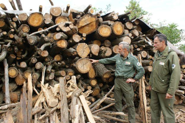 Tagli boschivi: le regole da seguire per gli abbattimenti nelle aree protette dell'Astigiano