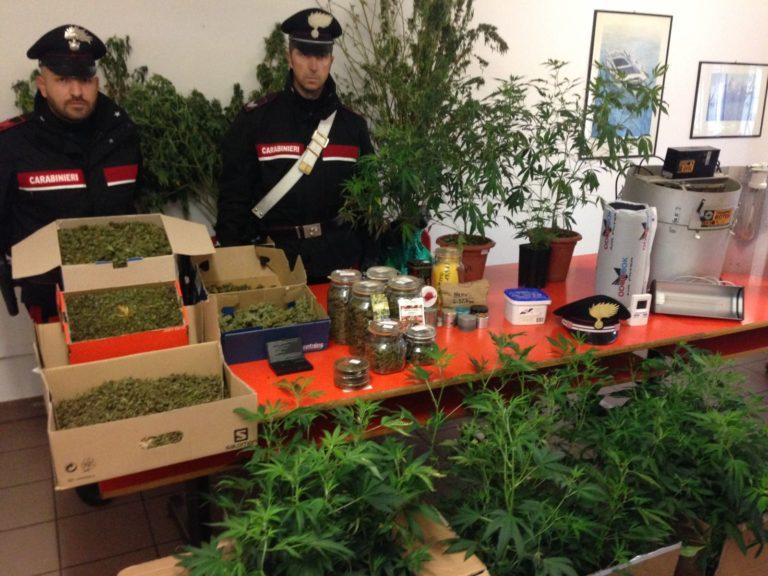 Fratelli specializzati in marijuana arrestati a Canelli
