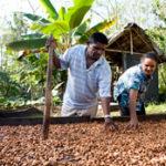 Cioccolato e cacao dal mondo alla Bottega di Rava e Fava