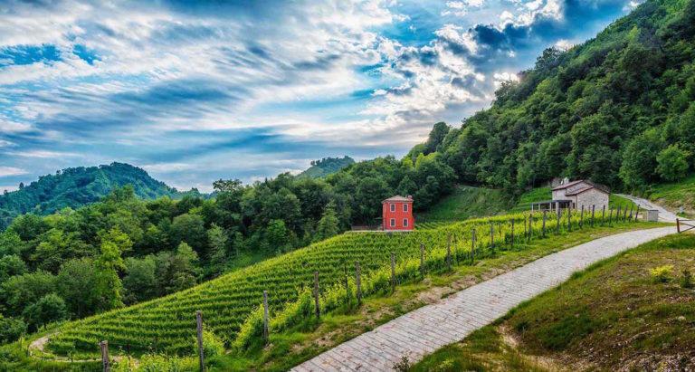 Ecco un itinerario per novembre dedicato agli amanti del vino