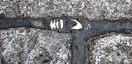 Quali fossili urbani racconteranno tra un milione di anni la nostra epoca? Mostra fotografica al Museo Paleontologico di Asti