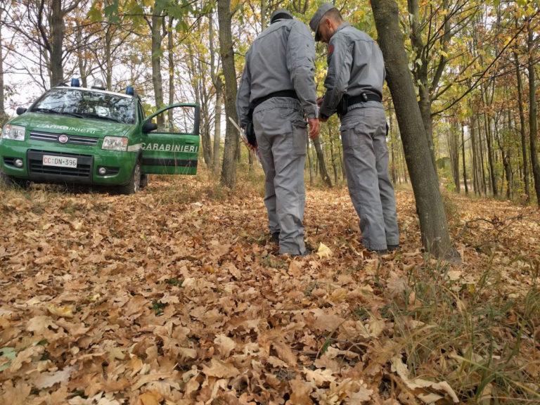 Raccolta illegale di tartufi: pugno duro dei carabinieri forestali