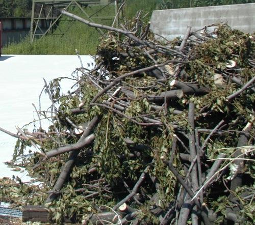 Nel periodo invernale l'Asp sospende la raccolta di verde e ramaglie