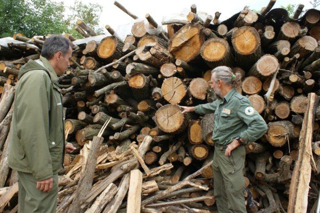 Tagli boschivi: superati i cento sopralluoghi dei guardiaparco nelle aree protette e non