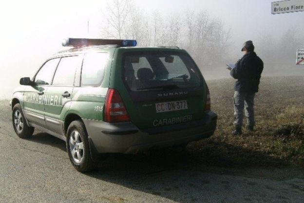 Asti, lupo investito in tangenziale: intervengono i carabinieri forestali