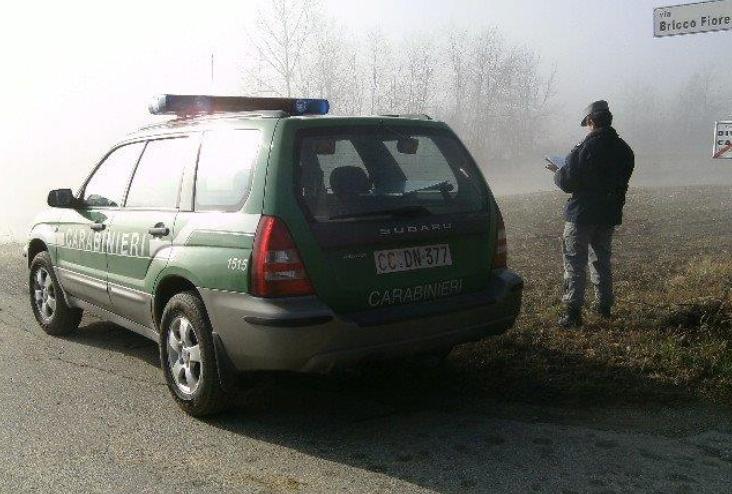 Taglia legna illegalmente: denunciato dai Forestali di Nizza Monferrato