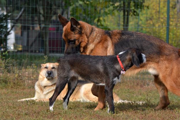 Rispetto degli animali: alla Banca del Dono di Asti mattinata con le associazioni di aiuto