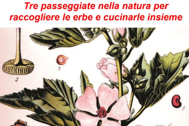 """Incontro sulle erbe e piante alimentari """"Il prato nel piatto"""" organizzato da Legambiente Valtriversa"""