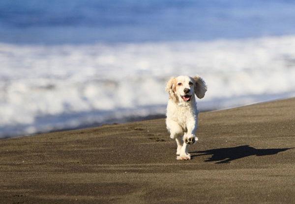 Cani in spiaggia: ecco il vademecum dell'Aidaa