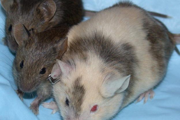Il Piemonte approva una legge per idurre la sperimentazione animale