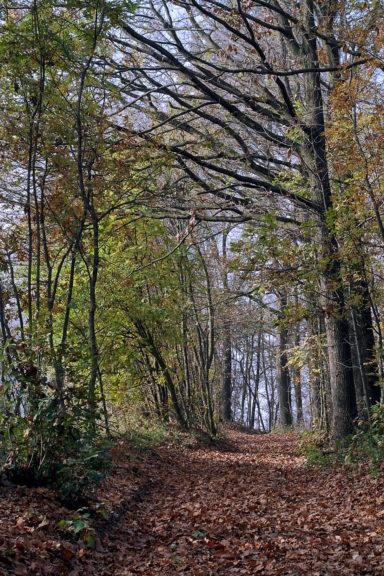 Da tagliare o potare: 400 alberi sotto l'osservazione dell'Ente Parco