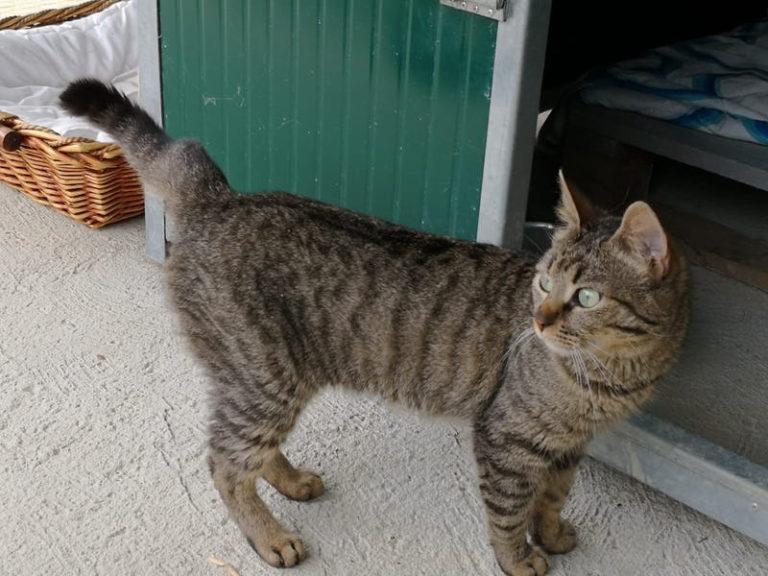A Moncalvo una casa di accoglienza per gatti senza proprietario