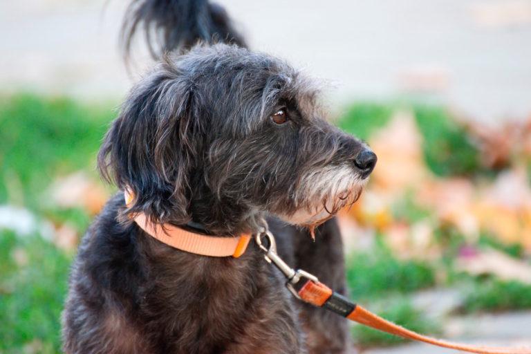 DMCShop e l'e-shopping per gli animali domestici