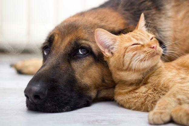 Presentato ordine del giorno per l'istituzione di un'assistenza veterinaria di base gratuita per animali d'affezione
