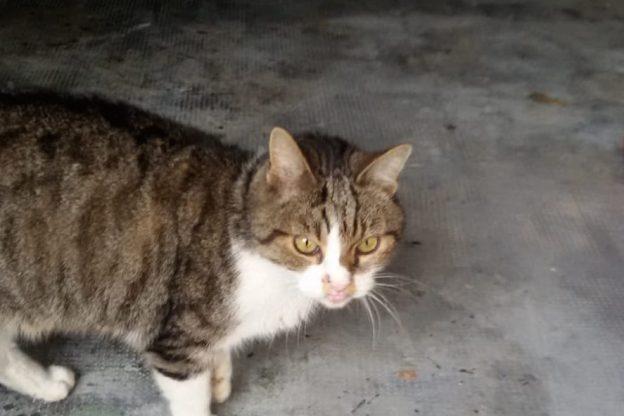 Appello per un gatto trovato in corso Dante