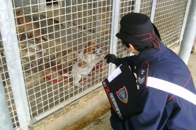 Prescriveva farmaci come un veterinario professionista: denunciata un'allevatrice di cani di Cossano Belbo