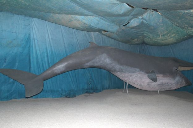 Pasquetta tra i fossili e 25 aprile con la balena Emilia  ad Asti