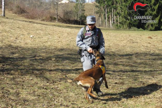 Cani antiveleno dei Carabinieri Forestali a San Damiano d'Asti. Scongiurato il pericolo di avvelenamento per un labrador