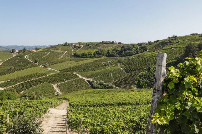 Dal nuovo Osservatorio Turistico Langhe, Monferrato e Roero segnali incoraggianti sul turismo estivo 2020 nonostante la pandemia