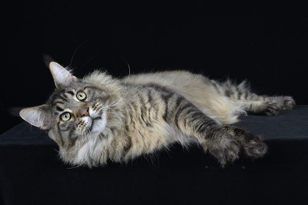 Quattrozampeinfiera: a Torino i gatti di tutto il mondo