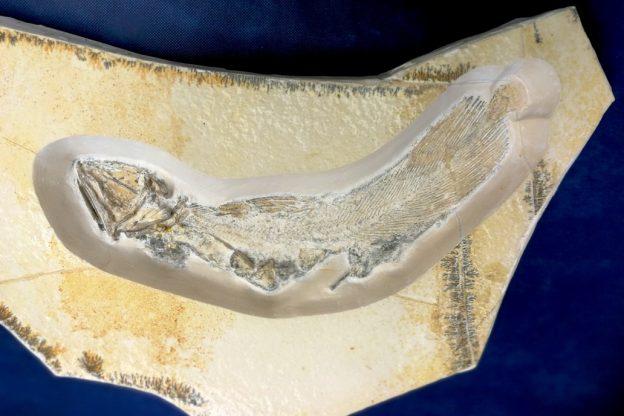 Al Museo Paleontologico alla scoperta dei fossili viventi: in mostra esemplari rari e curiosi