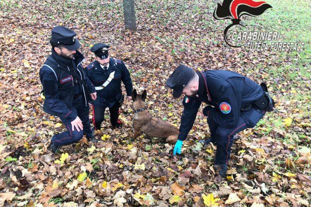 Sventato avvelenamento di cani da tartufi ad Agliano Terme