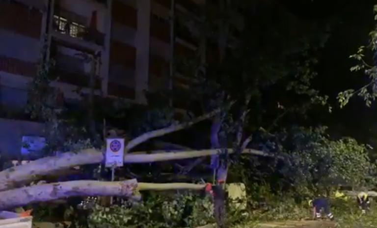 Alberi caduti e asfalto divelto: violento temporale nell'Astigiano