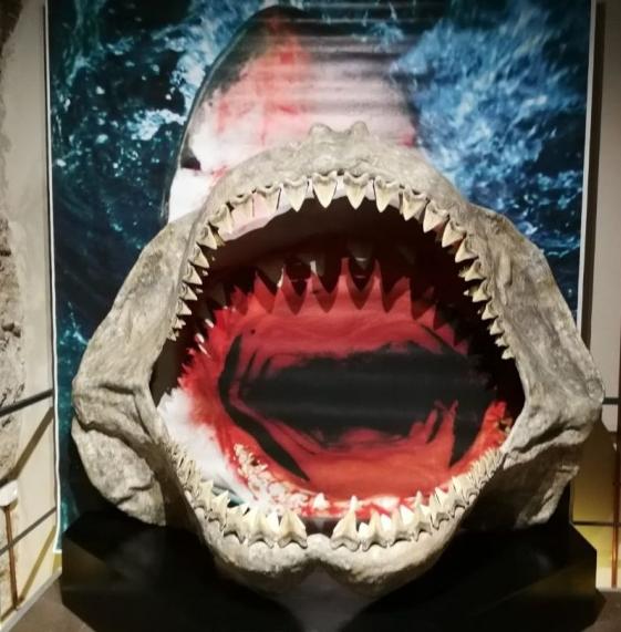 Asti, riapre il Museo Paleontologico