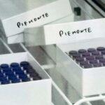 10.402 vaccinati contro il Covid oggi in Piemonte
