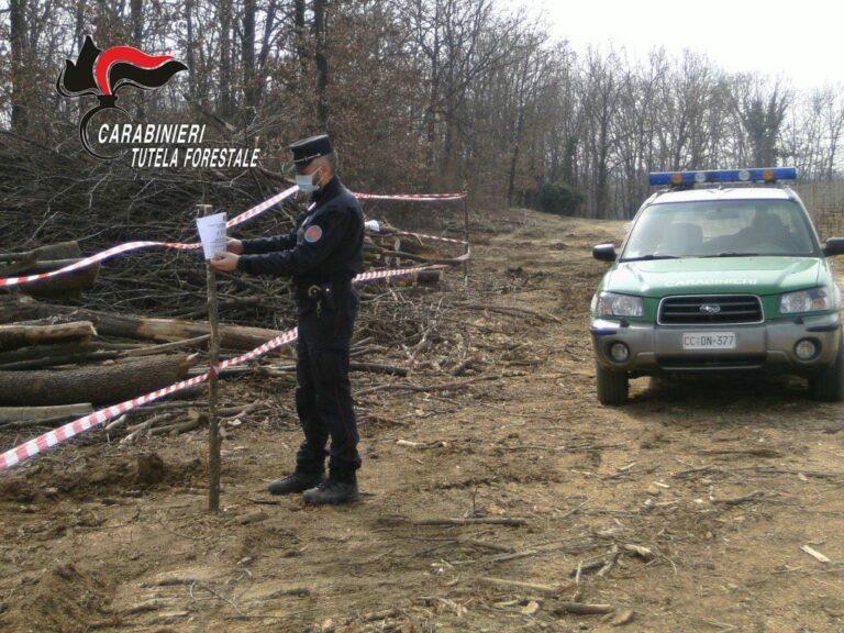 Fioccano le denunce per abbattimenti nei boschi e roghi improvvisati