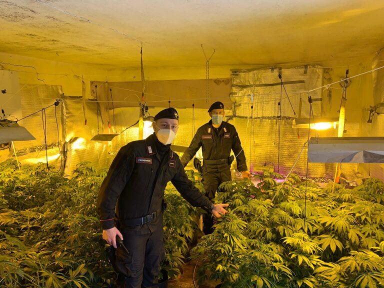I carabinieri scoprono una serra di marijuana a migliandolo