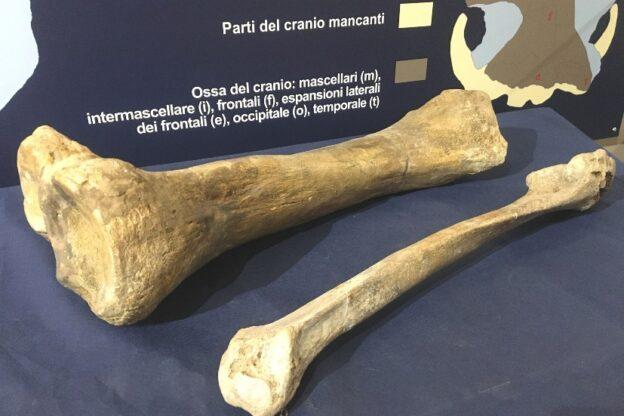 """I mastodonti di San Paolo Solbrito protagonisti di """"Fossili e Territori"""""""