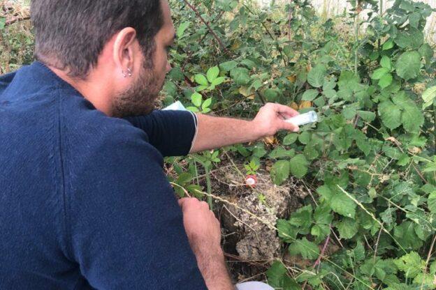 Iniziati in Piemonte i primi rilasci del Ganaspis brasiliensis antagonista naturale del moscerino dei piccoli frutti