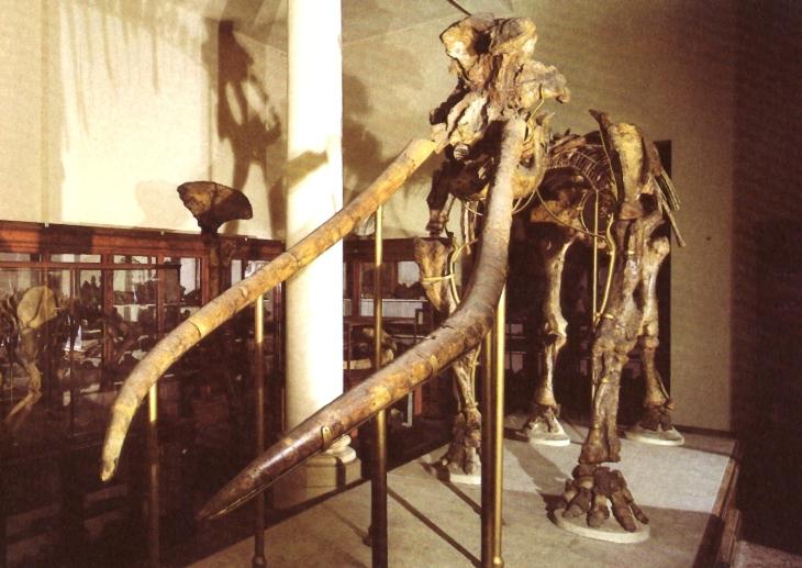 Tre mastodonti a Bologna raccontano la storia del Villafranchiano