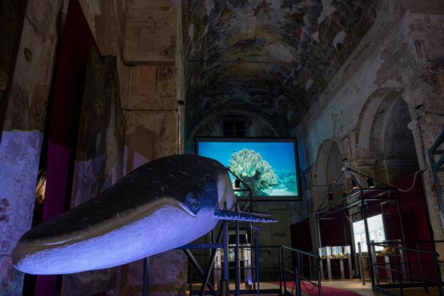 """""""Balene Preistoriche"""": oltre 2.200 visitatori nel primo mese, anche europei / il volume scientifico"""